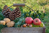 Fruits and fir — Stock Photo