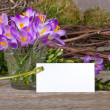 Crocuses — Stock fotografie