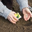 Stock Photo: Seeding