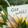 Get well — Stock Photo #25893039
