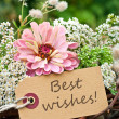 Best wishes — Stock Photo #31837037