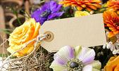 Blüten — Stockfoto