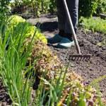 Vegetable garden — Stock Photo #47794885