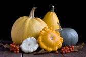 Pumpkins and squash — Stock Photo