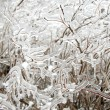 Stock Photo: Forzen icy twigs