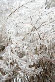 Forzen icy twigs — Stock Photo