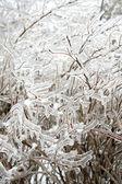 Forzen ledové větvičky — Stock fotografie