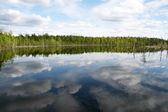 Forest Lake. Trees reflected in a water. Summer. — Stock Photo