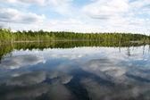 森林湖。树木在水中反映出来。夏天. — 图库照片