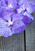Vanda coerulea orchids on the wooden background, close up — Stock Photo