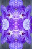 Art floral colorful background, Vanda coerulea orchids, close up — Stock Photo