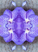 Art floral colorful background, Vanda coerulea blue orchids, clo — Stock Photo