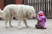 Little frightened toddler girl with big shepherd dog — Stock Photo