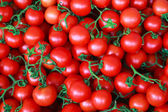 Ripe cherry tomatoes background — Stock Photo