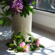 Pink flowers blooming dogrose and lupines in a vase on a windows — Stock Photo