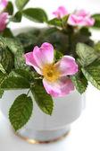 Różowe kwiaty kwitnące filiżanka w filiżance biały — Zdjęcie stockowe