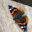 Stock Photo: Top view of a Red Admiral butterfly, Vanessa atalanta