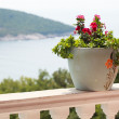 A pot of flowers on the balcony balustrade with a beautiful view — Stock Photo #30959659