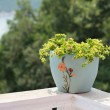 Stock Photo: A pot of flowers on the balcony balustrade with a beautiful view
