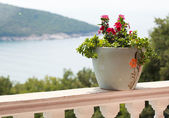 A pot of flowers on the balcony balustrade with a beautiful view — Stock Photo