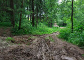 Forest road of mud — Stock Photo