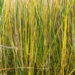 Texture of yellow green grass — Stock Photo
