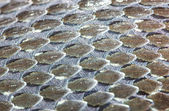Grass-Snake skin, reptile — Stock Photo