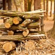 Stock Photo: Log lumber