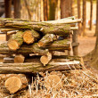 Foto Stock: Log lumber