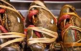 Giant mud crab — Stock Photo