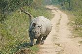 Rhinoceros attack — Stock Photo