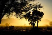 Morning in Namib-Naukluft National Park, Namibia — Stock Photo