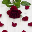 Red rose — Stock Photo #18979523