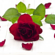 Red rose — Stock Photo #18979741