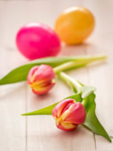 Two tulips with colored easter eggs — Stock Photo