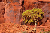 Red cliff and tree — Stock Photo