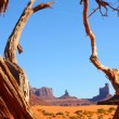Tree-framed buttes — Stock Photo #19149733