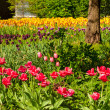 Stock Photo: Garden of tulips