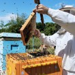 Stockfoto: Beekeeper at work