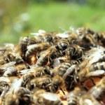 Beehive — Stock Photo #18344105