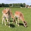 Stock Photo: Group of deer animals
