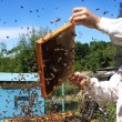Foto de Stock  : Beekeeper at work