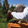 Stock Photo: Beekeeper at work