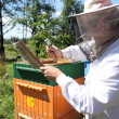 Beekeeper at work — Stockfoto #21632599