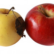 Stock Photo: Two apples.jpg