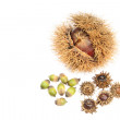 Chestnut and acorns — Stock Photo