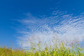 Autumn sky and the grass — Stock Photo