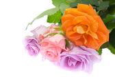 Květy růže — Stock fotografie