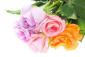 Flower of roses — Stock Photo