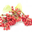 Stock Photo: Small red fruits